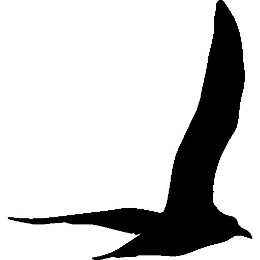 gull-bird-flying-shape
